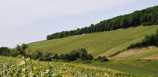 Bourgogne wine, Chablis Premier Cru appellation - Morein
