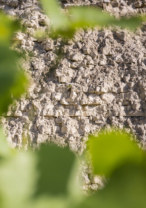 The soil of the Chablis/Chablis/Bourgogne/Burgundy/French wine/Chardonnay