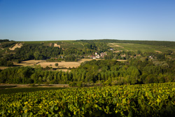 Sunny walks through the vines of Chablis in the Bourgogne region