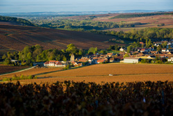 A guided tour through the vines of Chablis in the Bourgogne / Burgundy region