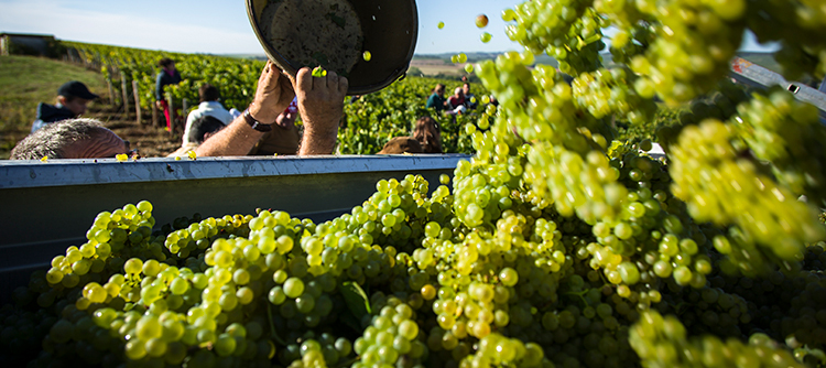 Explore the vintages in Chablis since 2012