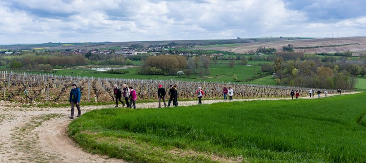 Transport yourself to the Chablis winegrowing region
